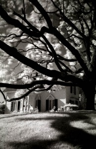The Tree in infrared